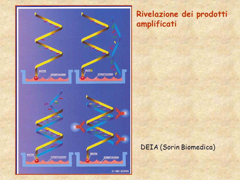 DEIA (Sorin Biomedica) Rivelazione dei prodotti amplificati