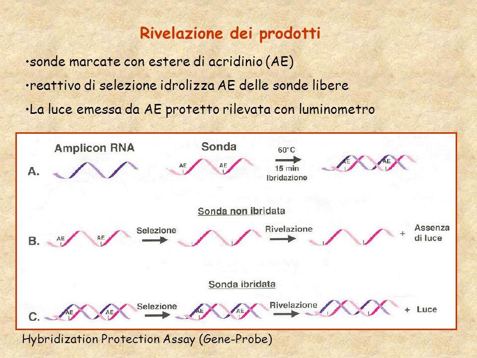 Rivelazione dei prodotti Hybridization Protection Assay (Gene-Probe) sonde marcate con estere di acridinio (AE) reattivo di selezione idrolizza AE delle sonde libere La luce emessa da AE protetto rilevata con luminometro