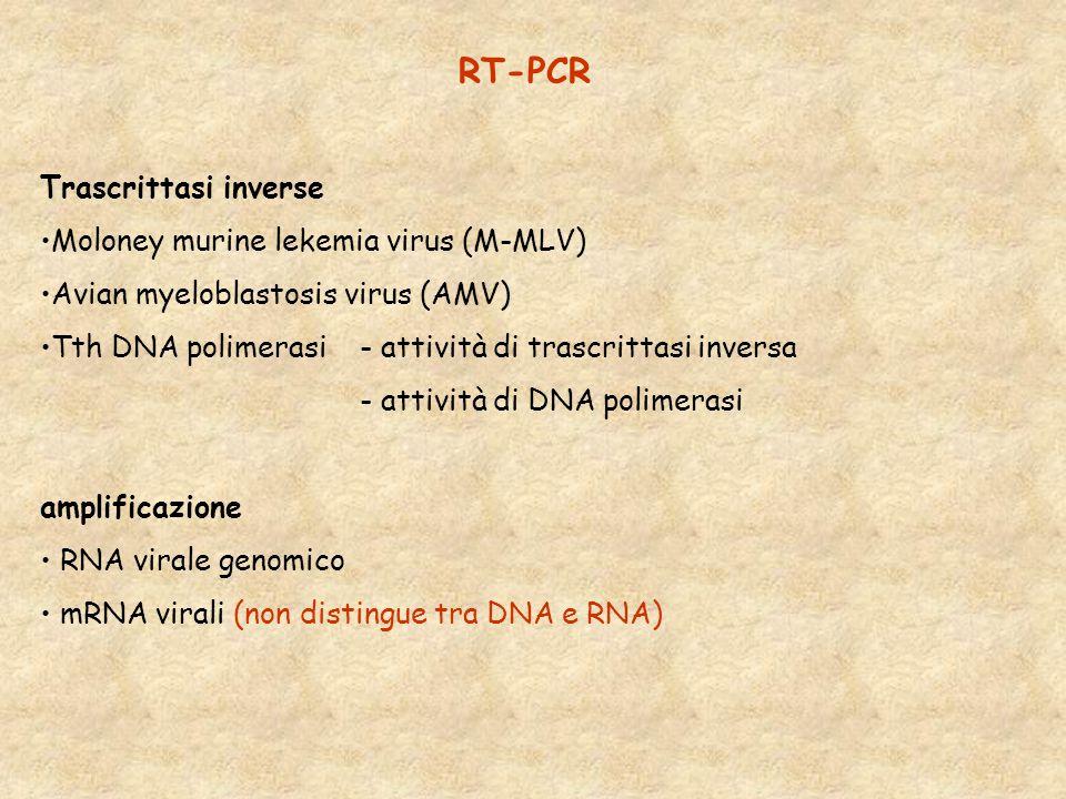 RT-PCR Trascrittasi inverse Moloney murine lekemia virus (M-MLV) Avian myeloblastosis virus (AMV) Tth DNA polimerasi - attività di trascrittasi inversa - attività di DNA polimerasi amplificazione RNA virale genomico mRNA virali (non distingue tra DNA e RNA)