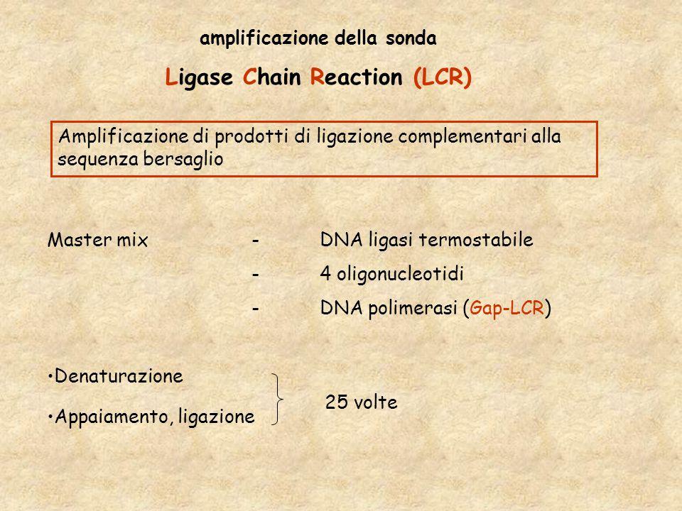 amplificazione della sonda Ligase Chain Reaction (LCR) Master mix-DNA ligasi termostabile -4 oligonucleotidi -DNA polimerasi (Gap-LCR) Denaturazione Appaiamento, ligazione Amplificazione di prodotti di ligazione complementari alla sequenza bersaglio 25 volte