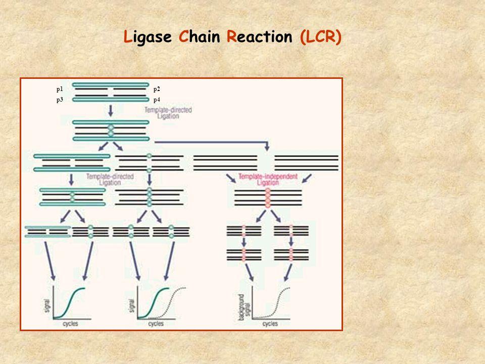 Ligase Chain Reaction (LCR) p1p2 p3p4