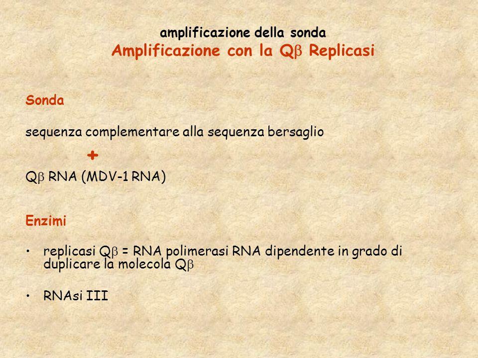 amplificazione della sonda Amplificazione con la Q  Replicasi Sonda sequenza complementare alla sequenza bersaglio + Q  RNA (MDV-1 RNA) Enzimi repli