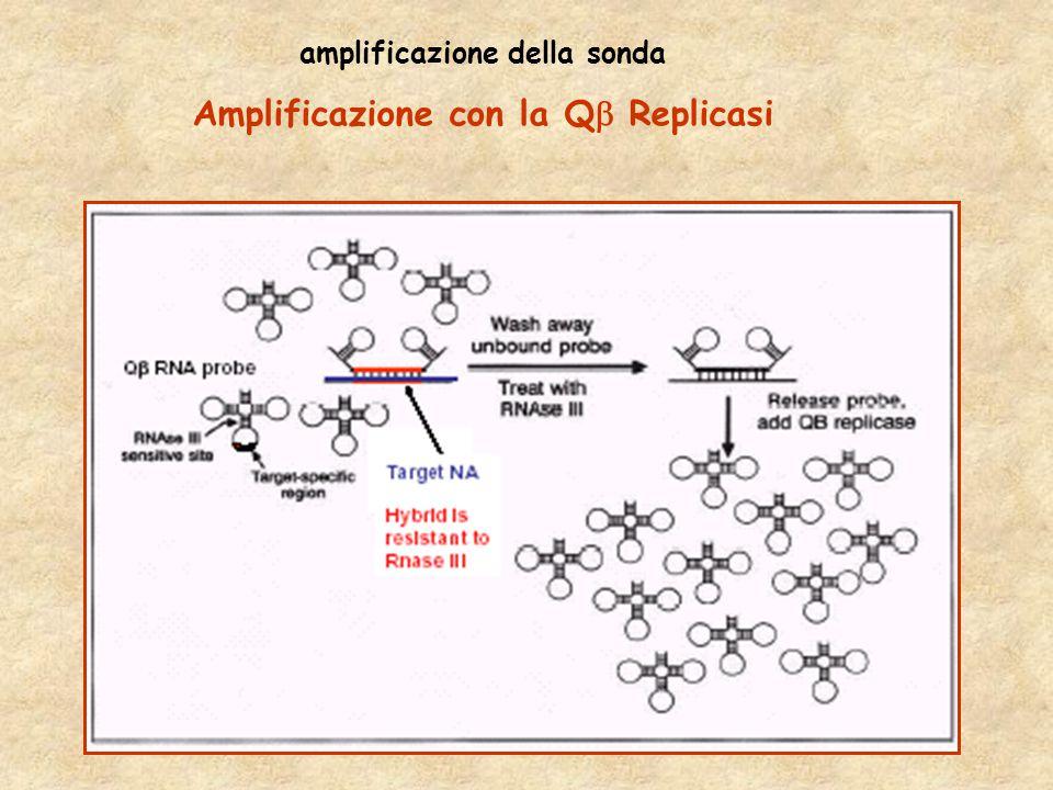 amplificazione della sonda Amplificazione con la Q  Replicasi