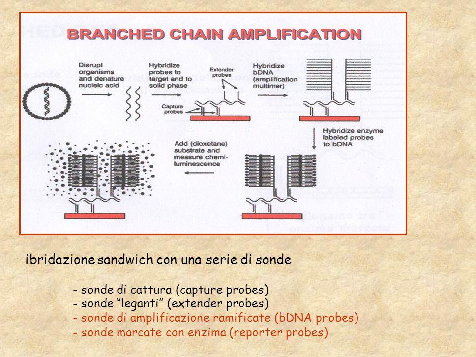 ibridazione sandwich con una serie di sonde - sonde di cattura (capture probes) - sonde leganti (extender probes) - sonde di amplificazione ramificate (bDNA probes) - sonde marcate con enzima (reporter probes)