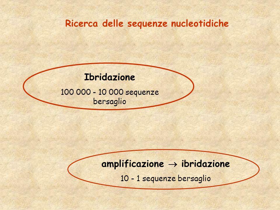 Ricerca delle sequenze nucleotidiche Ibridazione 100 000 - 10 000 sequenze bersaglio amplificazione  ibridazione 10 - 1 sequenze bersaglio
