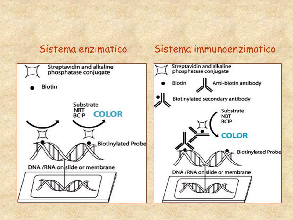Sistema enzimaticoSistema immunoenzimatico