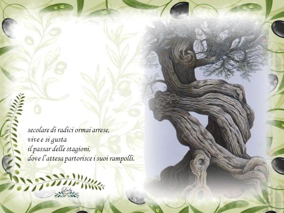 Silenzioso e serio, sguardo decrepito e legnoso, muto, tra braccia imploranti e fruscioso pettegolio di foglie,