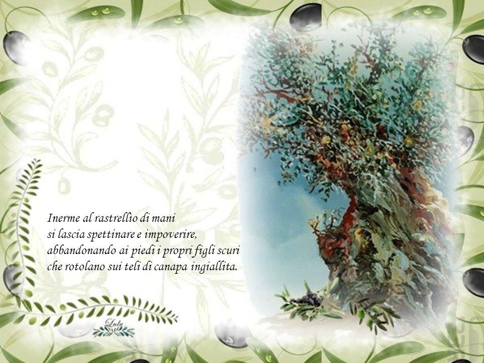 secolare di radici ormai arrese, vive e si gusta il passar delle stagioni, dove l'attesa partorisce i suoi rampolli.