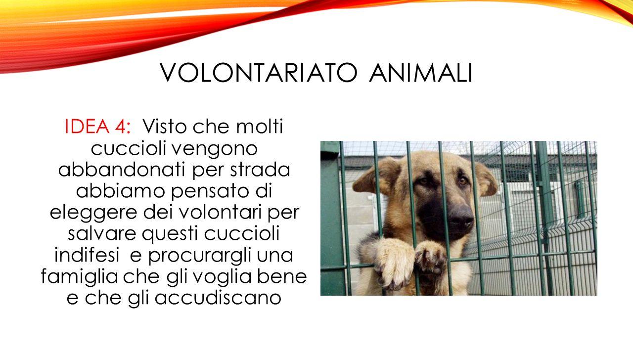 VOLONTARIATO ANIMALI IDEA 4: Visto che molti cuccioli vengono abbandonati per strada abbiamo pensato di eleggere dei volontari per salvare questi cuccioli indifesi e procurargli una famiglia che gli voglia bene e che gli accudiscano