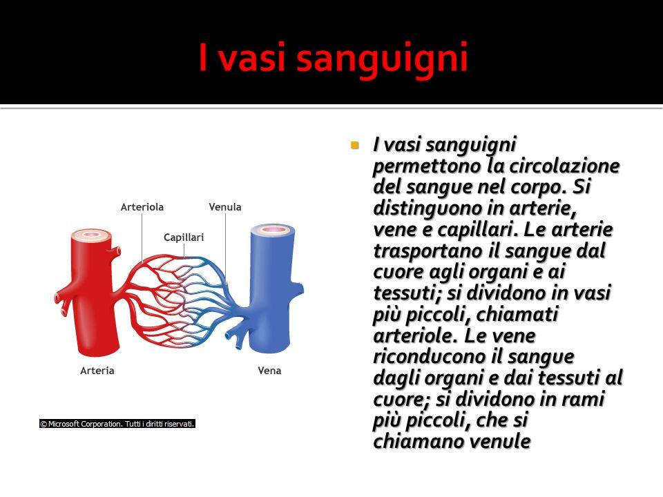  I vasi sanguigni permettono la circolazione del sangue nel corpo.