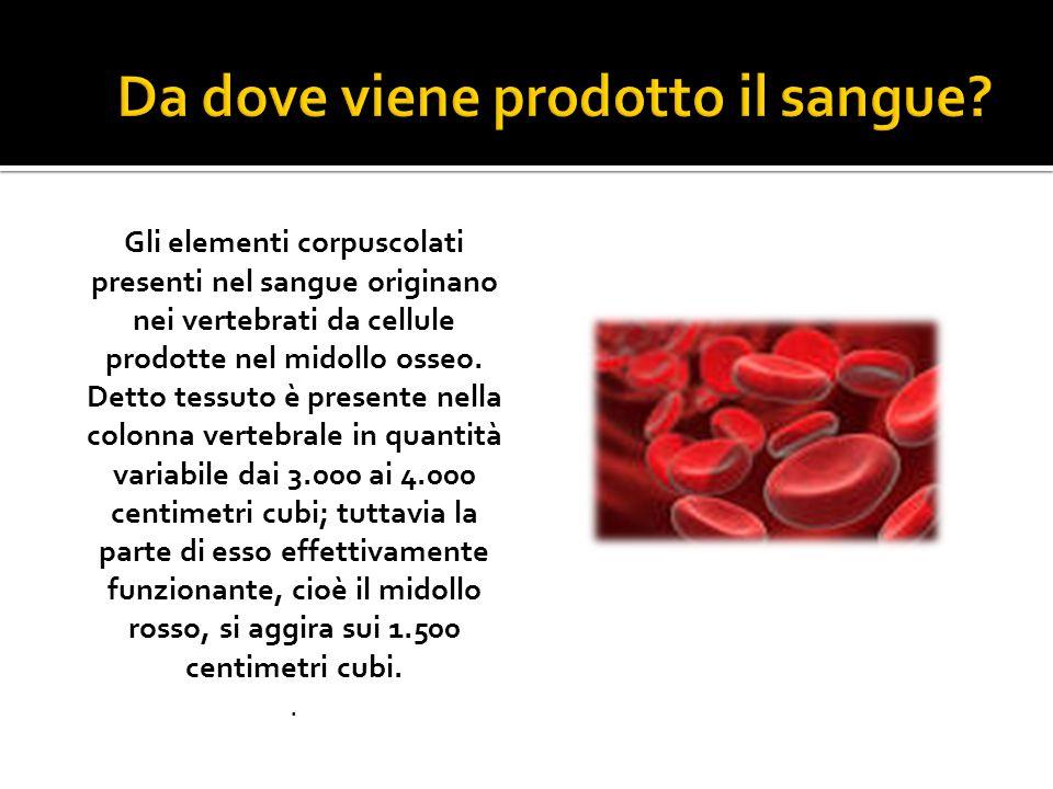 Gli elementi corpuscolati presenti nel sangue originano nei vertebrati da cellule prodotte nel midollo osseo.