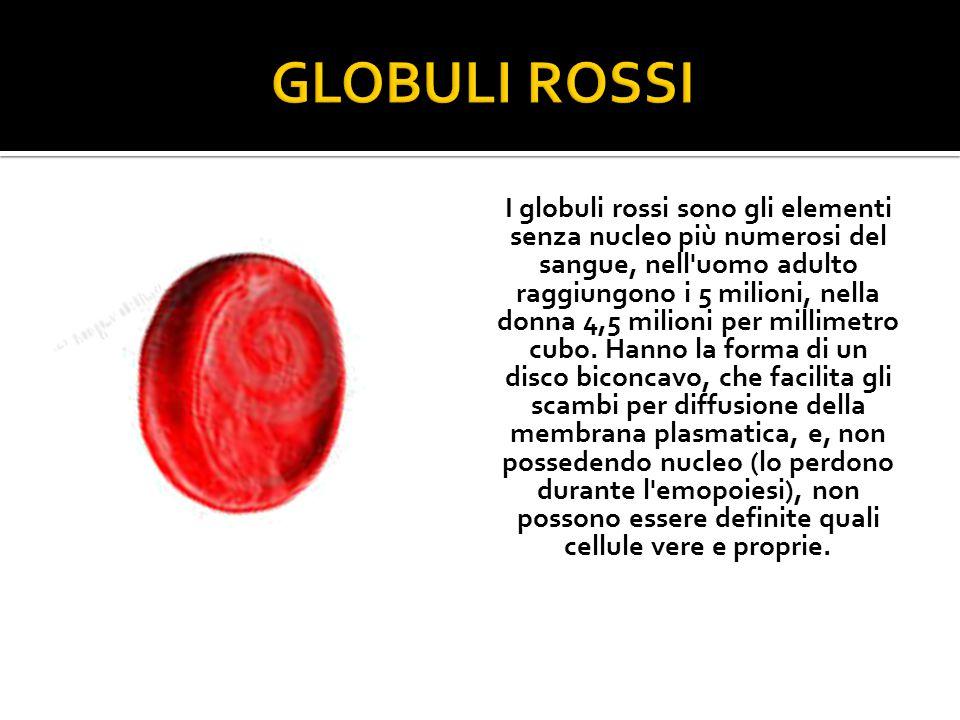I globuli rossi sono gli elementi senza nucleo più numerosi del sangue, nell uomo adulto raggiungono i 5 milioni, nella donna 4,5 milioni per millimetro cubo.