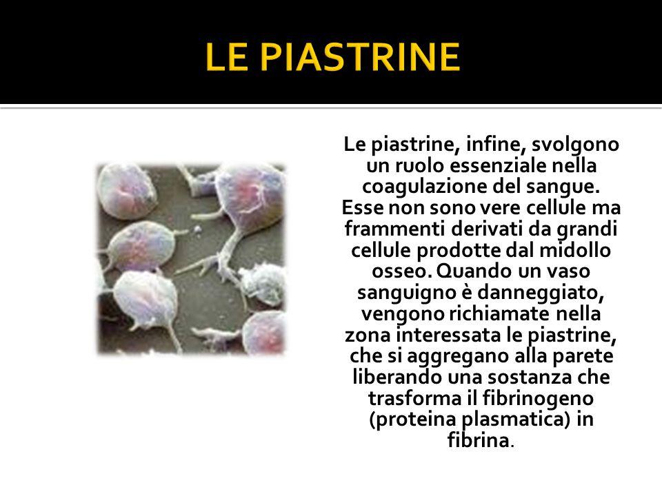 Le piastrine, infine, svolgono un ruolo essenziale nella coagulazione del sangue.