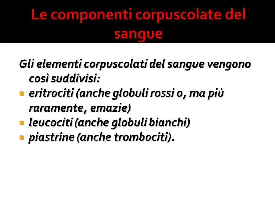 Gli elementi corpuscolati del sangue vengono così suddivisi:  eritrociti (anche globuli rossi o, ma più raramente, emazie)  leucociti (anche globuli bianchi)  piastrine (anche trombociti).