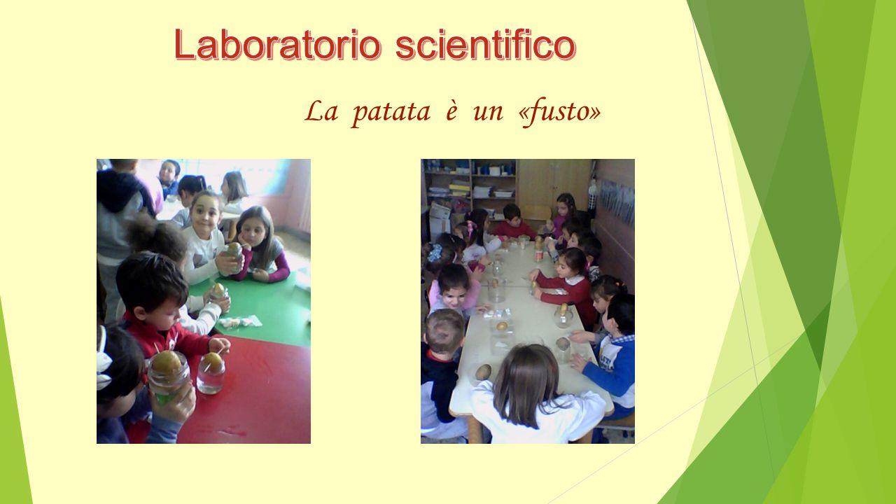 L'agricoltura e l'alimentazione, ai tempi della guerra…si basavano sulla coltivazione del grano e delle patate Ascoltiamo…Esperimenti-amo!!!