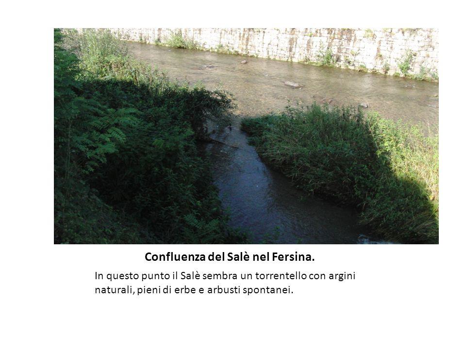Confluenza del Salè nel Fersina. In questo punto il Salè sembra un torrentello con argini naturali, pieni di erbe e arbusti spontanei.