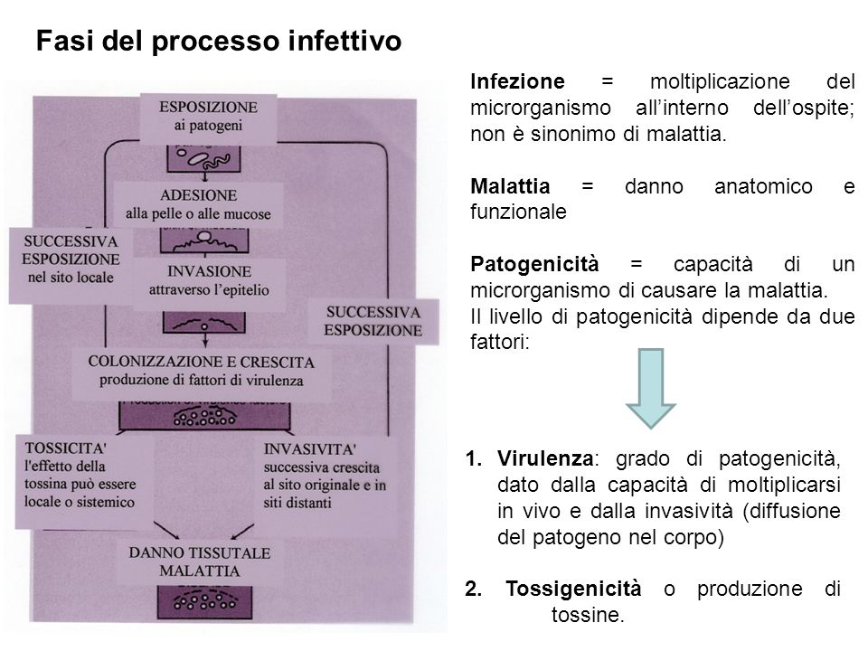 Infezione = moltiplicazione del microrganismo all'interno dell'ospite; non è sinonimo di malattia. Malattia = danno anatomico e funzionale Patogenicit