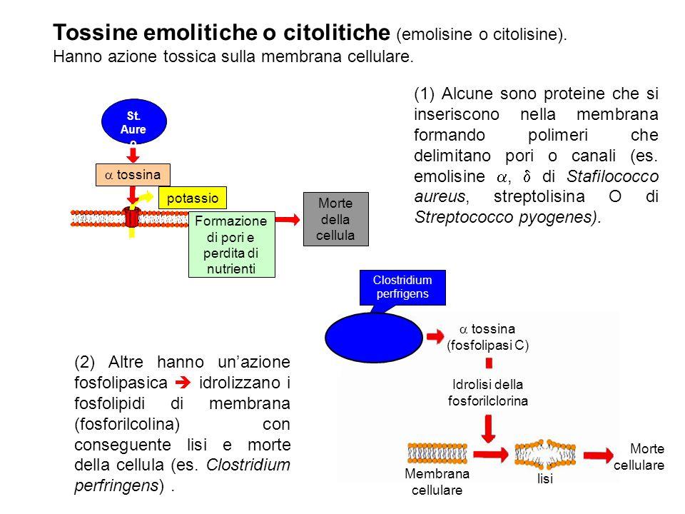 Tossine emolitiche o citolitiche (emolisine o citolisine). Hanno azione tossica sulla membrana cellulare.  tossina potassio Formazione di pori e perd