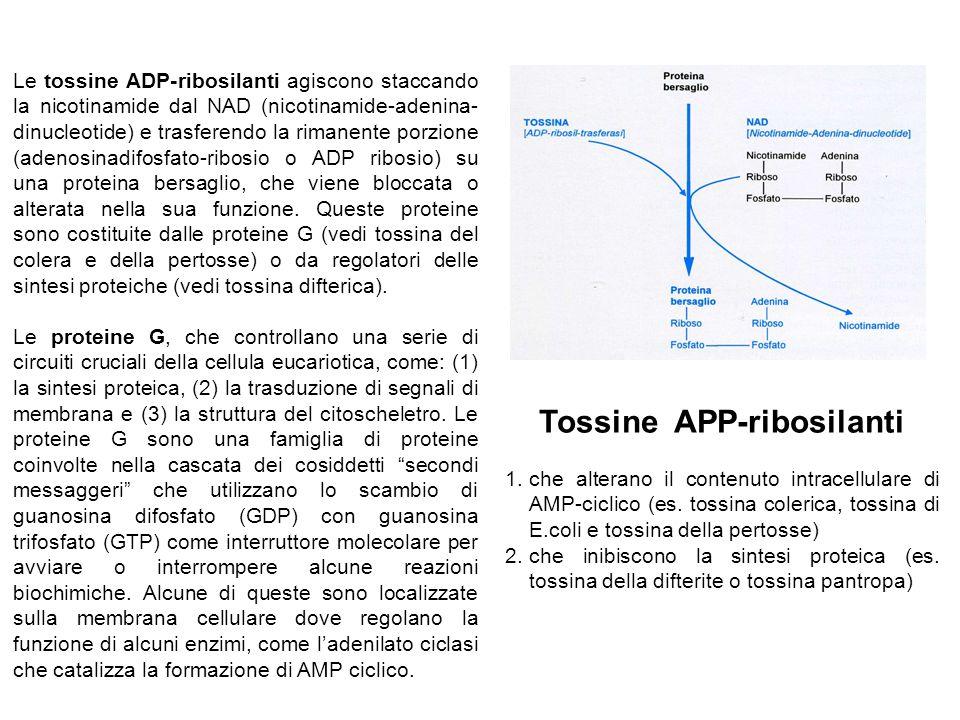 Le tossine ADP-ribosilanti agiscono staccando la nicotinamide dal NAD (nicotinamide-adenina- dinucleotide) e trasferendo la rimanente porzione (adenosinadifosfato-ribosio o ADP ribosio) su una proteina bersaglio, che viene bloccata o alterata nella sua funzione.