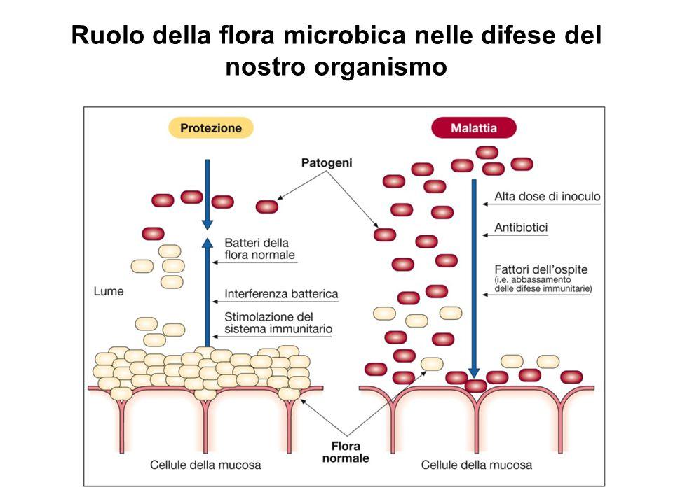 Ruolo della flora microbica nelle difese del nostro organismo