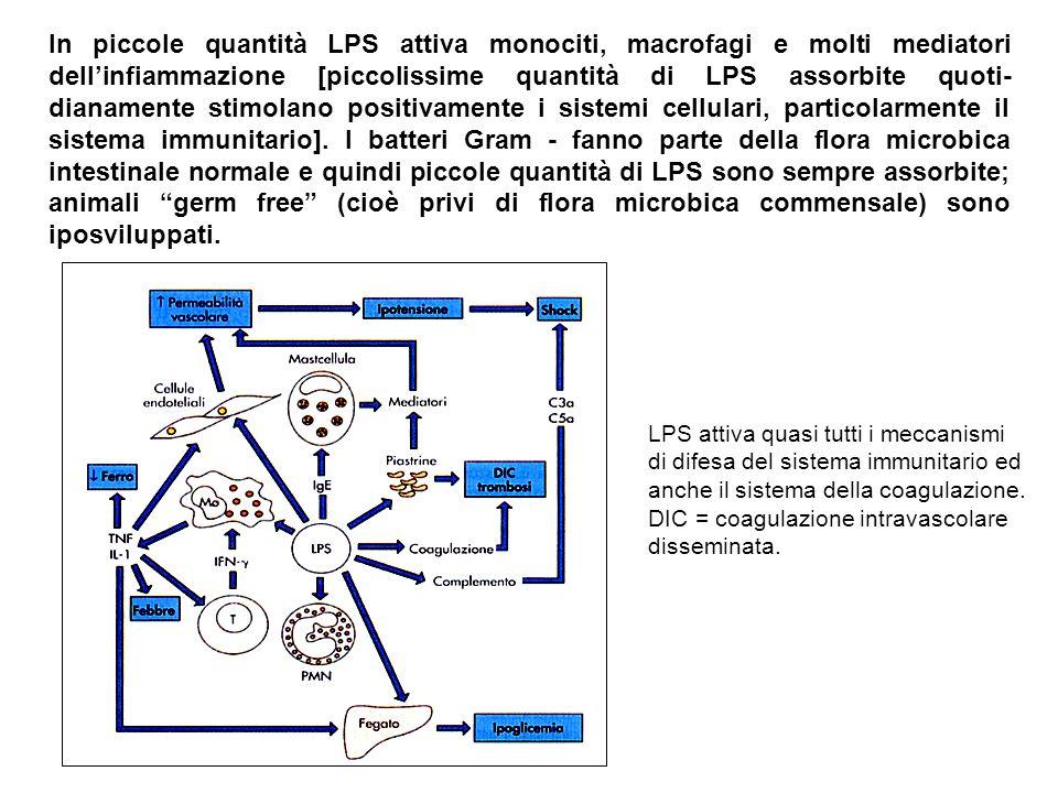 In piccole quantità LPS attiva monociti, macrofagi e molti mediatori dell'infiammazione [piccolissime quantità di LPS assorbite quoti- dianamente stimolano positivamente i sistemi cellulari, particolarmente il sistema immunitario].