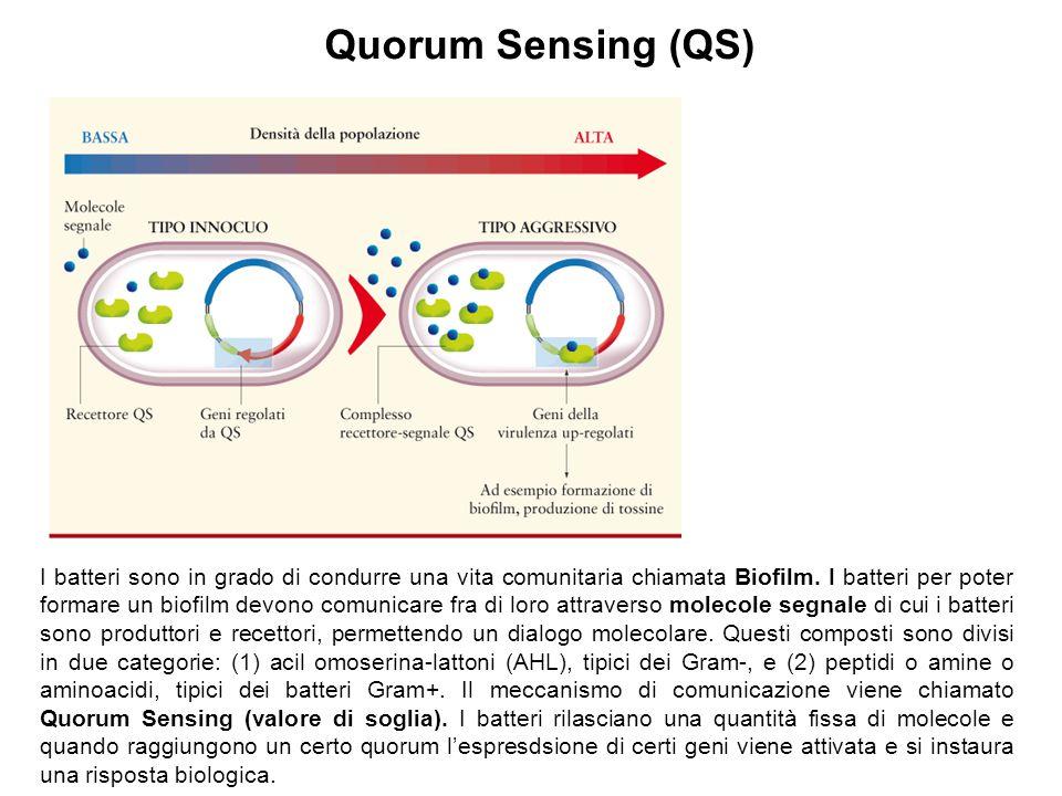 Quorum Sensing (QS) I batteri sono in grado di condurre una vita comunitaria chiamata Biofilm. I batteri per poter formare un biofilm devono comunicar