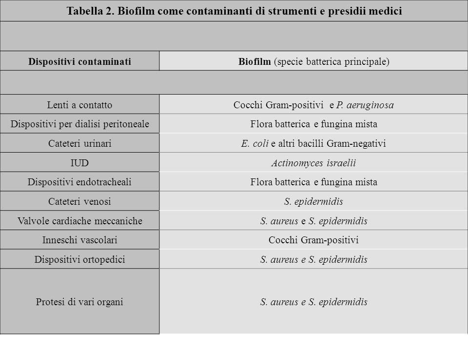 Tabella 2. Biofilm come contaminanti di strumenti e presidii medici Dispositivi contaminatiBiofilm (specie batterica principale) Lenti a contattoCocch