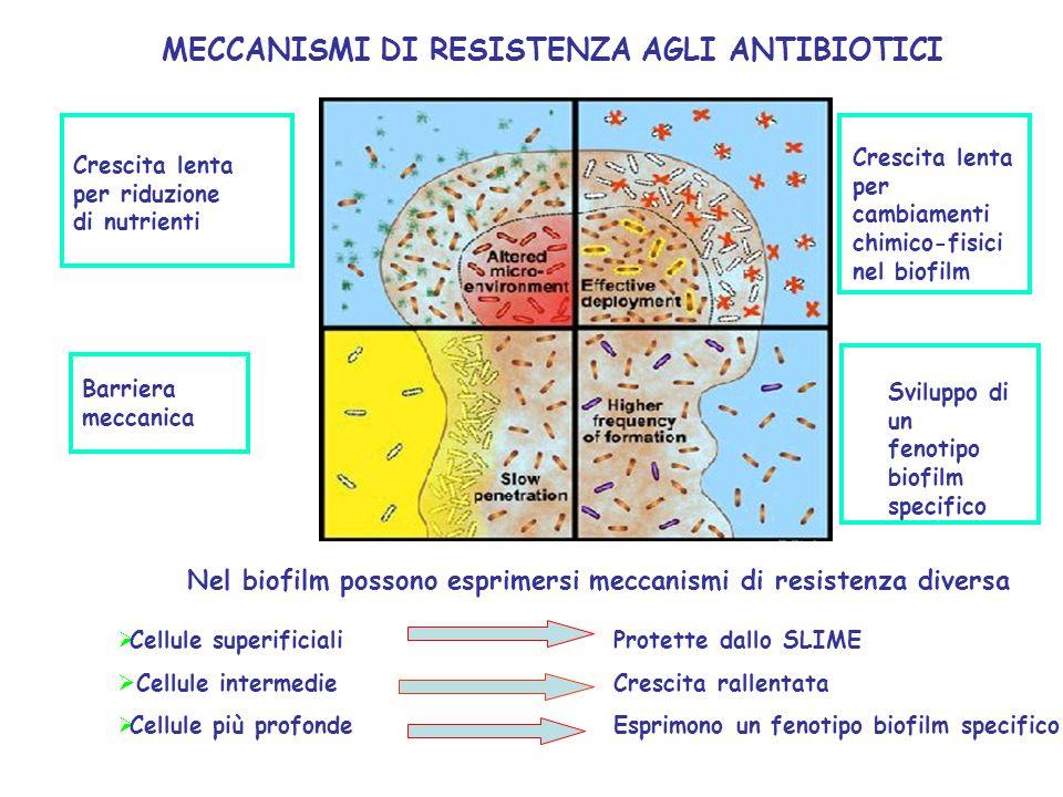 Barriera meccanica Crescita lenta per riduzione di nutrienti Crescita lenta per cambiamenti chimico-fisici nel biofilm Sviluppo di un fenotipo biofilm specifico Nel biofilm possono esprimersi meccanismi di resistenza diversa  Cellule superificiali  Cellule intermedie  Cellule più profonde Protette dallo SLIME Crescita rallentata Esprimono un fenotipo biofilm specifico MECCANISMI DI RESISTENZA AGLI ANTIBIOTICI