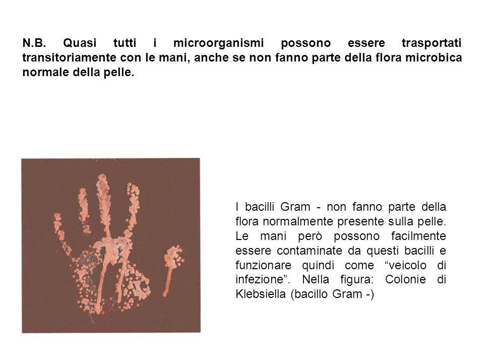 N.B. Quasi tutti i microorganismi possono essere trasportati transitoriamente con le mani, anche se non fanno parte della flora microbica normale dell