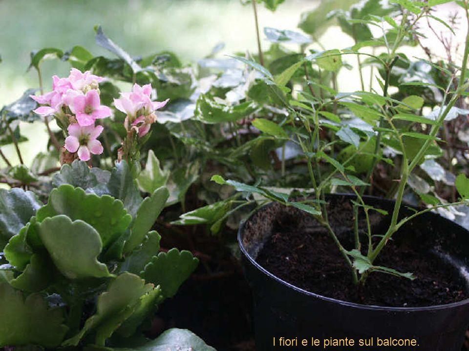 Mi trovavo sul balcone di casa, e vedo una piccola ape che gironzola tra i rametti di erica delle fioriere.