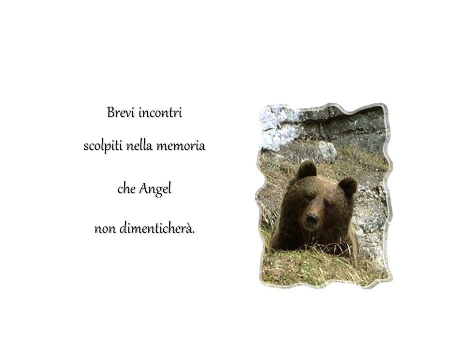 Muso a muso con l'orso L ORSO è lì a quindici passi e cammina sul sentiero verso di me.