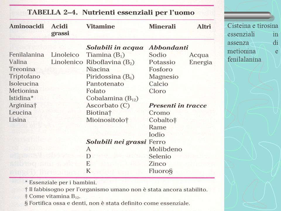 Amminoacidi essenziali Cisteina e tirosina essenziali in assenza di metionina e fenilalanina