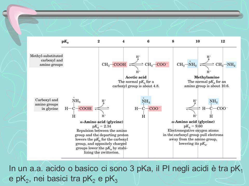 In un a.a. acido o basico ci sono 3 pKa, il PI negli acidi è tra pK 1 e pK 2, nei basici tra pK 2 e pK 3