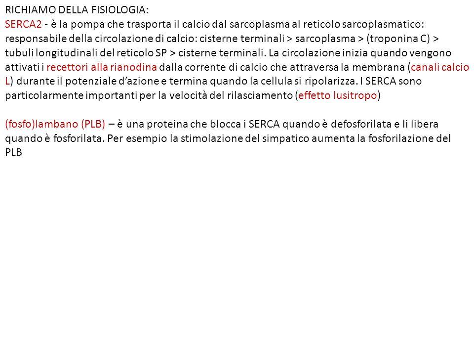 RICHIAMO DELLA FISIOLOGIA: SERCA2 - è la pompa che trasporta il calcio dal sarcoplasma al reticolo sarcoplasmatico: responsabile della circolazione di calcio: cisterne terminali > sarcoplasma > (troponina C) > tubuli longitudinali del reticolo SP > cisterne terminali.