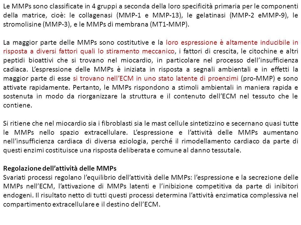 Le MMPs sono classificate in 4 gruppi a seconda della loro specificità primaria per le componenti della matrice, cioè: le collagenasi (MMP-1 e MMP-13), le gelatinasi (MMP-2 eMMP-9), le stromolisine (MMP-3), e le MMPs di membrana (MT1-MMP).