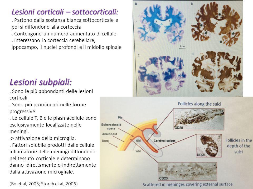 Lesioni subpiali:. Sono le più abbondanti delle lesioni corticali. Sono più prominenti nelle forme progressive. Le cellule T, B e le plasmacellule son
