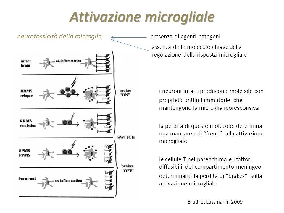 Attivazione microgliale neurotossicità della microglia presenza di agenti patogeni assenza delle molecole chiave della regolazione della risposta micr