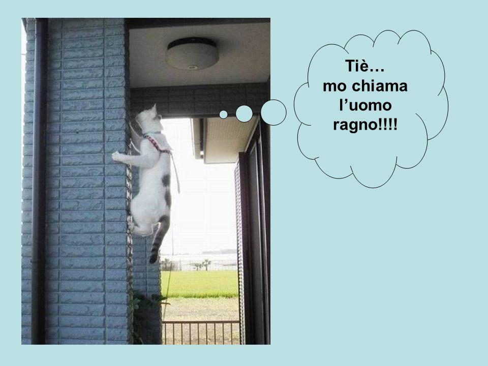 Tiè… mo chiama l'uomo ragno!!!!
