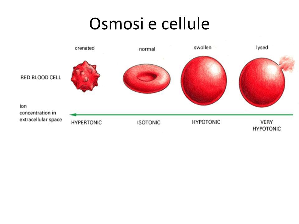 Osmosi e cellule