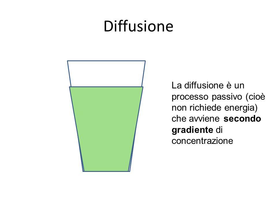 Osmosi Flusso acqua Soluzione ipotonica Soluzione ipertonica Membrana semipermeabile