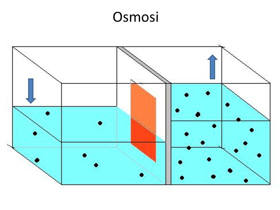 Processo passivo (secondo gradiente) Processo attivo (contro gradiente) L'acqua di mare è ipertonica rispetto ai liquidi interni del pesce