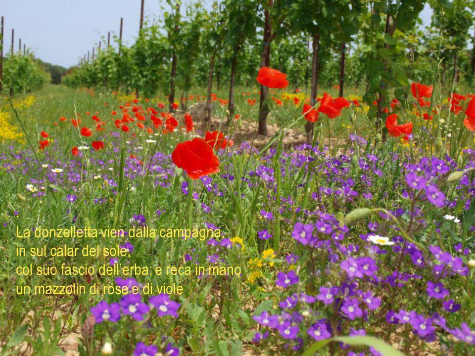 , La donzelletta vien dalla campagna, in sul calar del sole, col suo fascio dell'erba; e reca in mano un mazzolin di rose e di viole