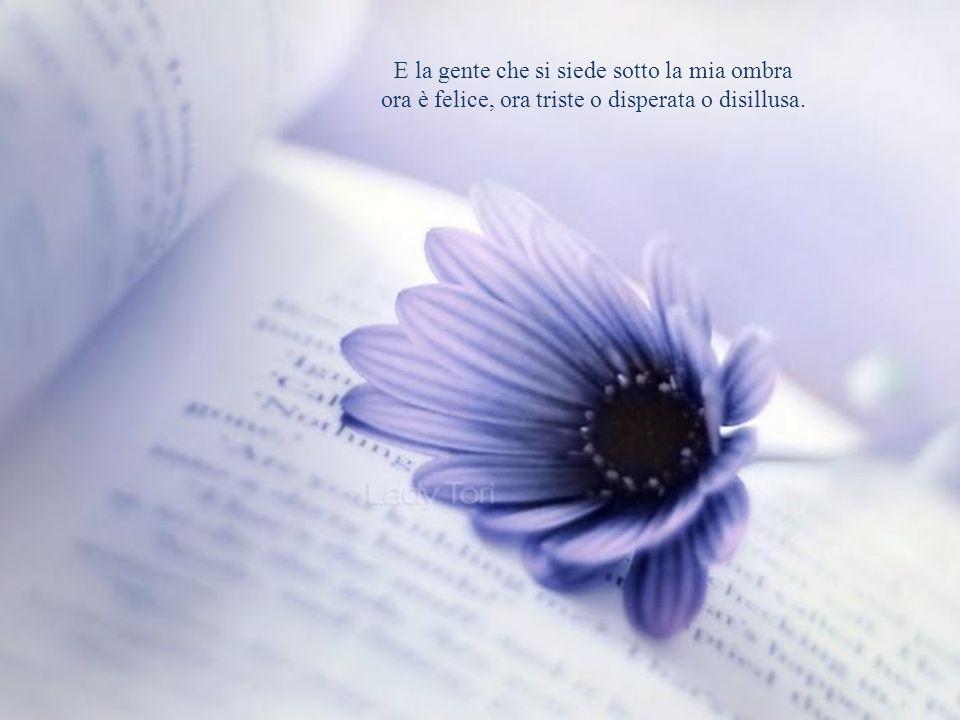 Nessun giorno è uguale ad un altro, piccolo fiore: il tocco del vento è più o meno dolce; l'odore dell'aria, la luce del sole sono diversi ogni giorno