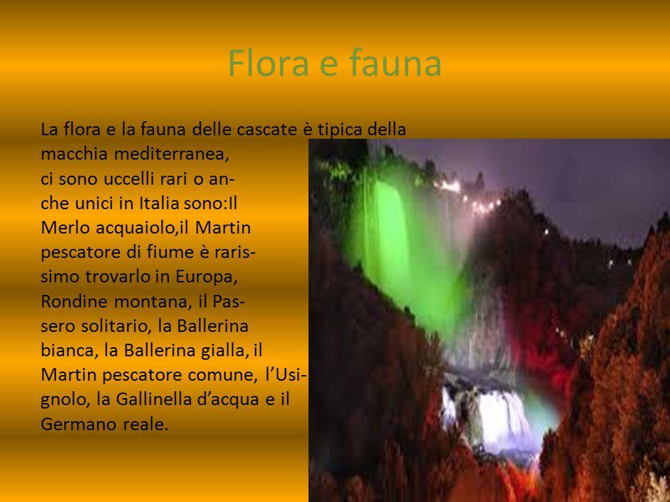 Flora e fauna La flora e la fauna delle cascate è tipica della macchia mediterranea, ci sono uccelli rari o an- che unici in Italia sono:Il Merlo acqu