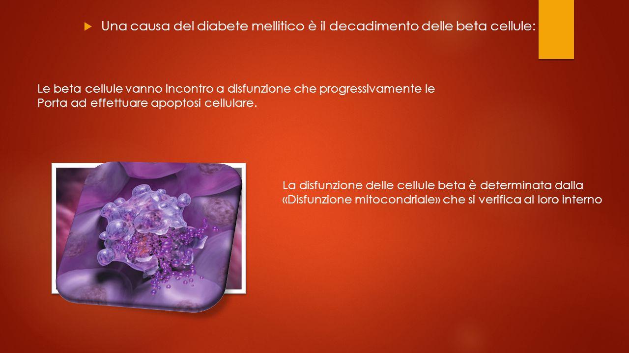  Una causa del diabete mellitico è il decadimento delle beta cellule: Le beta cellule vanno incontro a disfunzione che progressivamente le Porta ad effettuare apoptosi cellulare.