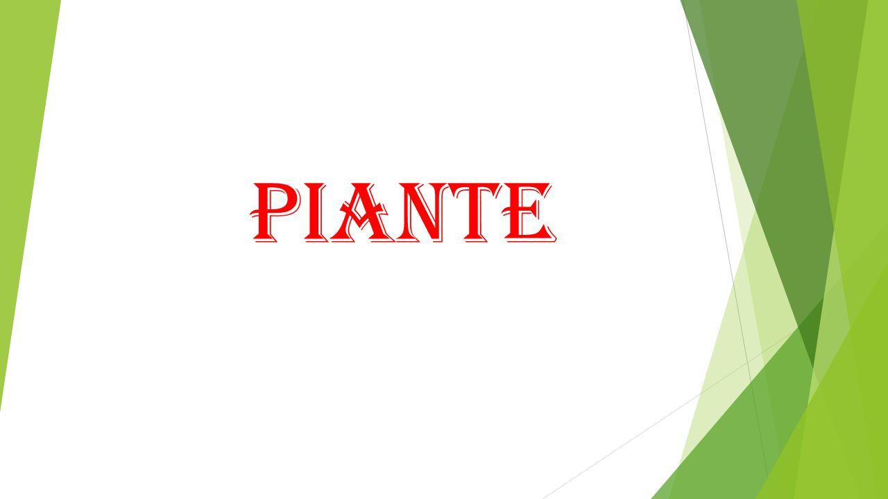 PIANTE CARNIVORE Le piante carnivore sono delle piante erbacee, che in risposta alla carenza di nutrienti propria del loro habitat, si sono adattate a ricavare le sostanze nutritive dalla digestione delle proteine degli animali.