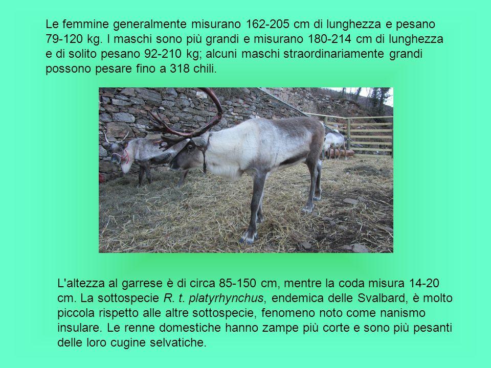 BIBLIOGRAFIA http://it.wikipedia.org/wiki/Rangifer_tarandus http://www.animalinelmondo.com/animali/mammiferi/531/renna.html www.animalieanimali.it/enciclopedia/renna.pdf