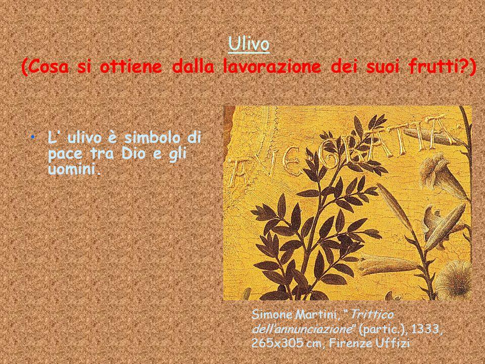 """Ulivo (Cosa si ottiene dalla lavorazione dei suoi frutti?) L' ulivo è simbolo di pace tra Dio e gli uomini. Simone Martini, """"Trittico dell'annunciazio"""