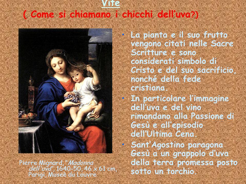 """Vite ( Come si chiamano i chicchi dell'uva ?) Pierre Mignard, """"Madonna dell'uva"""", 1640-50, 46 x 61 cm, Parigi, Museè du Louvre La pianta e il suo frut"""