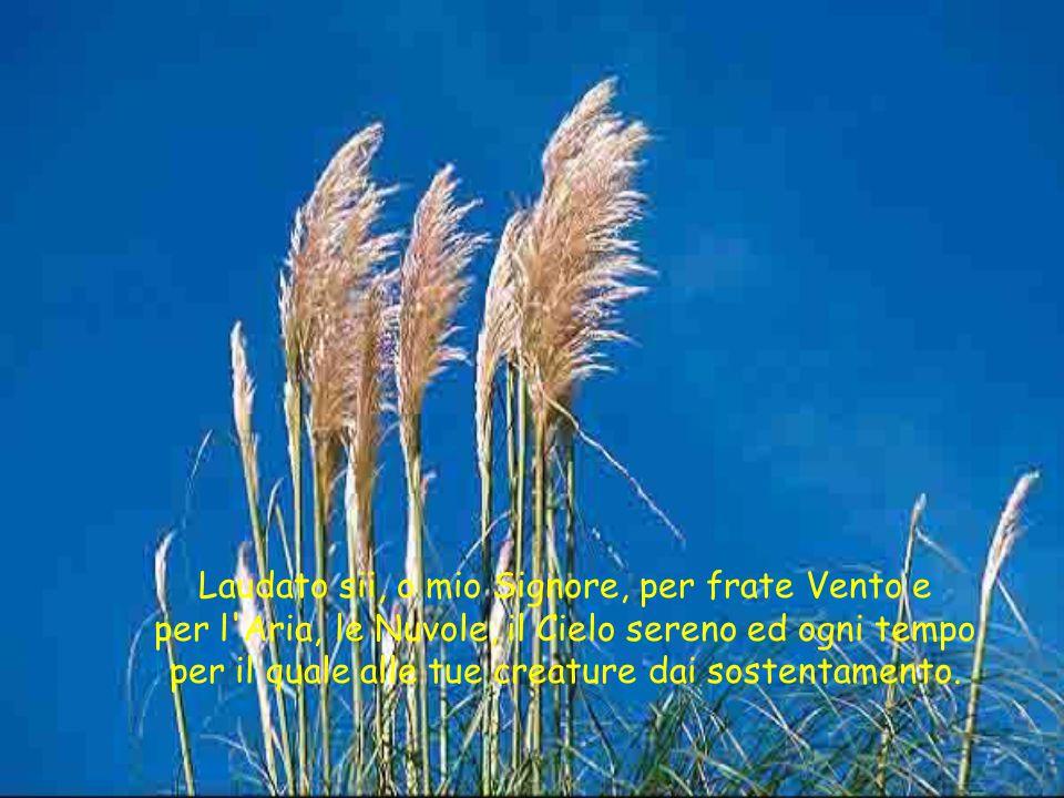 Laudato sii, o mio Signore, per frate Vento e per l'Aria, le Nuvole, il Cielo sereno ed ogni tempo per il quale alle tue creature dai sostentamento.